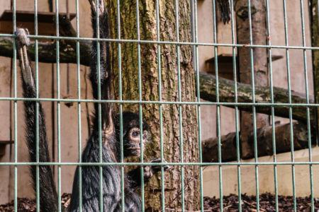 Ein Affe im Wuppertaler Zoo