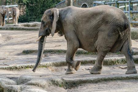 Elefant im Vordergrund